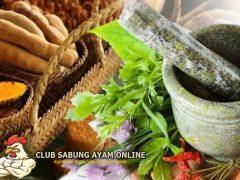 Jamu Khusus Penambah Stamina Ayam Bangkok