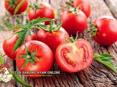 Manfaat Tomat Untuk Ayam Aduan Dan Cara Pemberiannya