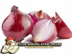 Khasiat Bawang Merah untuk Ayam Aduan