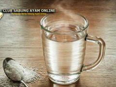 5 Manfaat Air Garam Untuk Ayam Aduan